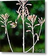 Hummingbird Emerald Green - Hummer Floats In Floral Glory Metal Print