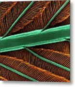Hummingbird Feather Shaft Metal Print