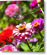 Hummingbird Flight Metal Print by Garry Gay