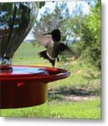 Hummingbird Flying To The Feeder Metal Print