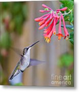 Hummingbird Happiness Metal Print