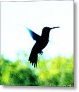 Hummingbird Hover Metal Print