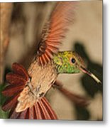 Hummingbird I Metal Print