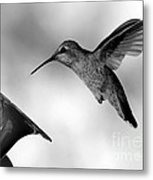 Hummingbird In Black And White Metal Print