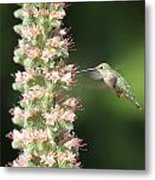 Hummingbird In Burbank Garden Metal Print