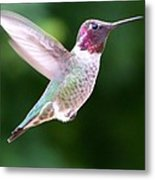 Hummingbird In Flight Metal Print