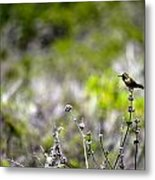 Hummingbird In Green Metal Print
