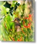 Hummingbird In The Daylilies Metal Print