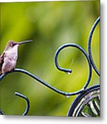 Hummingbird In The Rain Metal Print