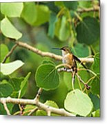 Hummingbird In Tree Metal Print