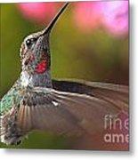 Hummingbird Intensity Metal Print