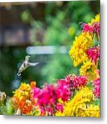 Hummingbird Moment Metal Print