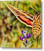 Hummingbird Moth In Wildflowers Metal Print