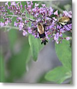 Hummingbird Moths Metal Print