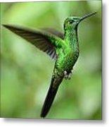 Hummingbird No 1 Metal Print