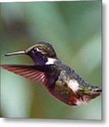 Hummingbird Of Ecuador Metal Print