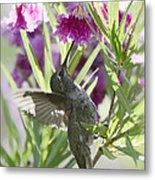 Hummingbird On A Desert Willow Metal Print