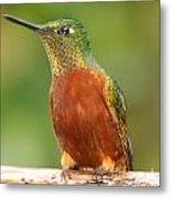 Hummingbird On A Limb Metal Print