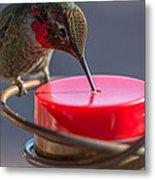 Hummingbird On Feeder Metal Print