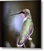Hummingbird Photo - Side View Metal Print