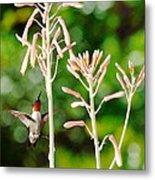 Hummingbird Pink Green - Floating Hummingbird Flashes Red Metal Print