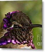 Hummingbird Portrait Metal Print