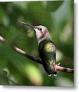 Hummingbird - Ruby-throated Hummingbird - Detail Metal Print