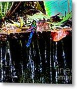 Hummingbird Shower Metal Print
