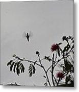 Hummingbird Silhouette I Metal Print