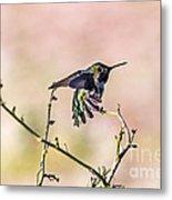 Hummingbird Stretch Metal Print