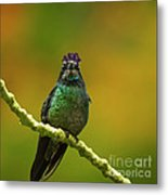 Hummingbird With A Lilac Crown Metal Print