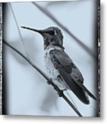 Hummingbird With Old-fashioned Frame 1 Metal Print