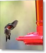 Hummingbirds 376 Metal Print