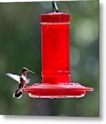 Hummingbirds 388 Metal Print