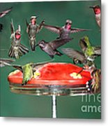 Hummingbirds Metal Print