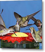 Hummingbirds At Feeder Metal Print