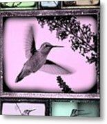 Hummingbirds In Old Frames Collage Metal Print