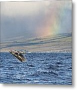 Humpback Whale And Rainbow Metal Print
