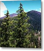 Humphreys Behind The Spruces  Metal Print