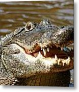 Hungry Alligator Metal Print