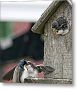 Hungry Babies Metal Print