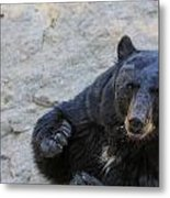 Hungry Bear Metal Print
