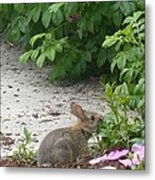 Hungry Bunny Metal Print