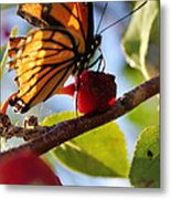 Butterfly And The Cherry Metal Print