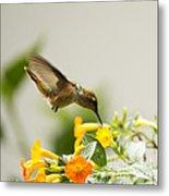 Hungry Flowerbird Metal Print