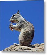 Hungry Ground Squirrel Metal Print