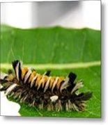 Hungry Hairy Caterpillar Metal Print