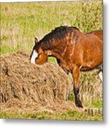 Hungry Horse Metal Print