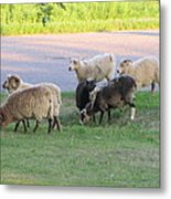 Hungry In Life  Metal Print