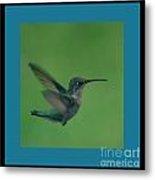 Hungry Little Hummingbird 6 Metal Print